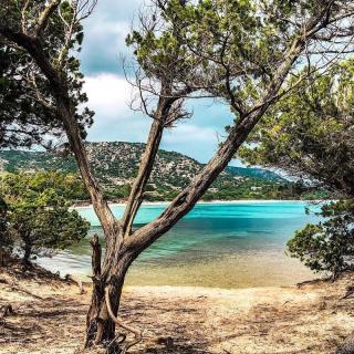 Profitez de la nouvelle ligne Toulon-Hyères vers la Corse, direction les aéroports de Bastia et Ajaccio ! Envolez vous sans plus attendre pour l'île de beauté ✈️ . . 📷 @cdt_lisa . . #DepartToulonHyeres #Voyage #Vacances #Corse #Ajaccio #Bastia #decouvertes #instaeurope #instatraveling