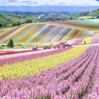 C'est le printemps ! La saison idéale pour voir la vie en couleurs 😍 . . 📷 @miramikati . . #Voyage #Vacances #decouvertes #instatraveling #spotter #Aviation #Aviationspotter #provence #var #Hyerestourisme #presquiledegiens #Airfrance #japon #printemps #spring #couleurs