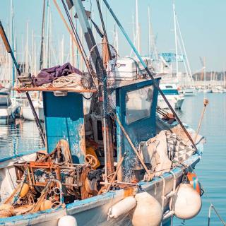 Le Port📍 Toulon Venez admirer les bateaux de pêche amarrés dans le port de  Toulon. . . @manon_suene_pradier . . #Brest #Bretagne #Light #BestofBretagne #Brittany #Breizh  #Finistere #Morbihan #BestofEurope #Passionpassport  #Placestovisit #Goexplore #Welivetoexplore #Miamorbihan  #France #Beautifuldestinations #Traveling #Landscape  #Toulonvousouvrelemonde #Departtoulonhyeres #Beautiful  #Islandlife #Lovetotravel #Travelingram